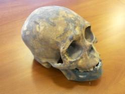 druk-3d-model-koncepcyjny-czaszka